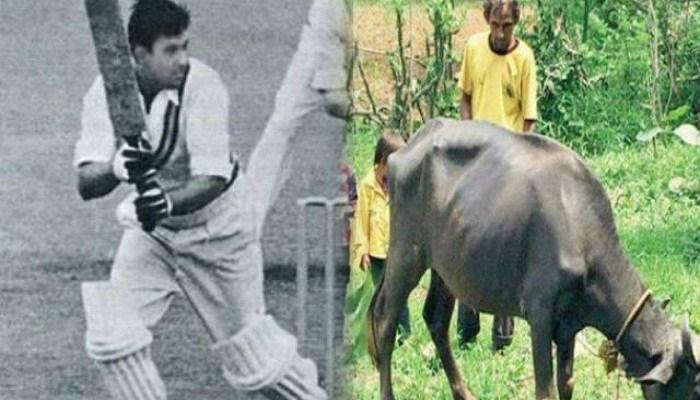 IPL में खिलाड़ियों पर बरस रहे करोड़ों, मगर भैंस चराने को मजबूर 1998 वर्ल्ड कप का ये हीरो – Live Uttar Pradesh